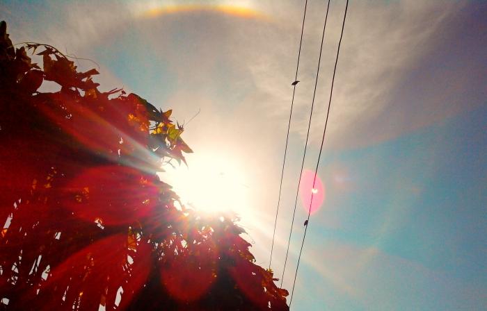 Direct Sun, Rainbow, Flowers and Birds on Rope
