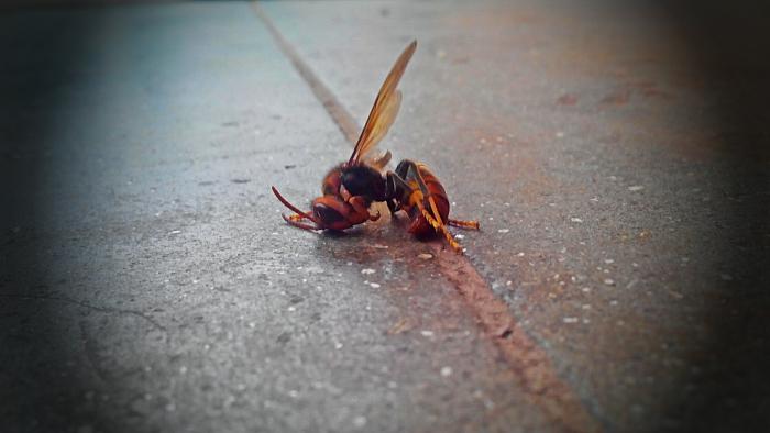 Bee Lying on Floor