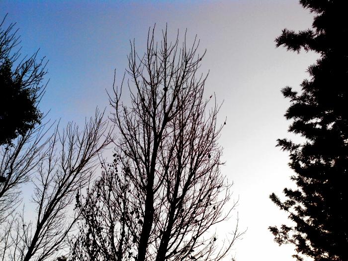 Dry Tree in UN Park